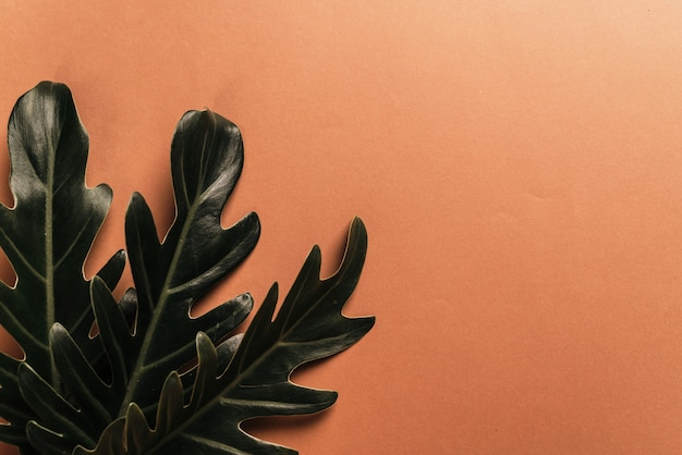 モンステラの葉がサンゴの表面に