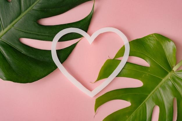 Monstera는 심장 모양으로 파스텔 산호에 나뭇잎.