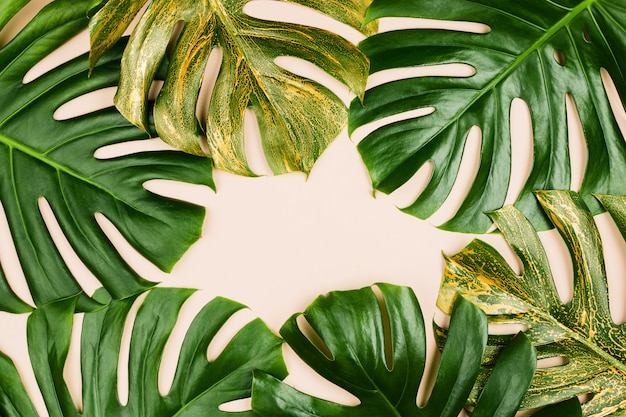 モンステラの葉は金色に塗られています。夏のコンセプト、flatlay、パステル背景、copyspace