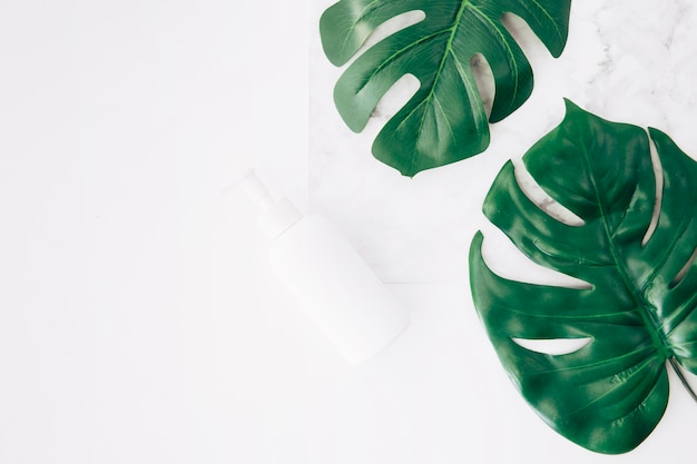 Monstera leaves or swiss cheese leaves with dispenser bottle on white backdrop
