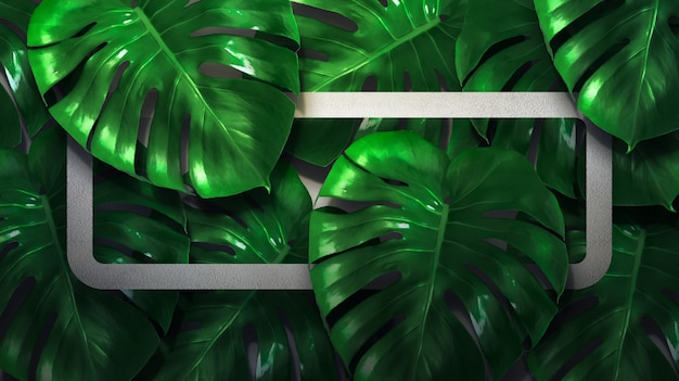Monstera leaves with color frame and background