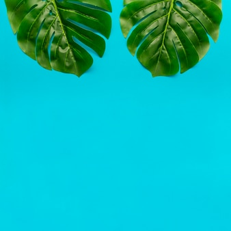 Monstera leaves with copy space below