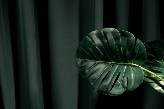 Monstera leaves with copy space