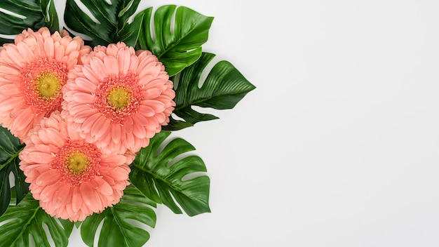 Monstera leaves with gerbera flowers
