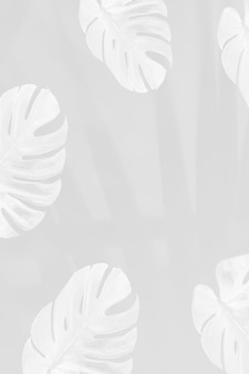 Foglie di monstera con ombra di foglie di palma su sfondo grigio