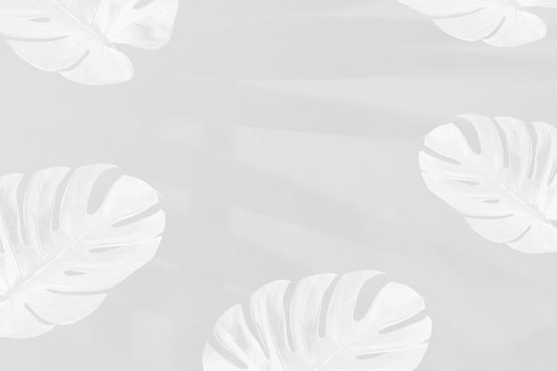 灰色の背景にヤシの葉の影とモンステラの葉
