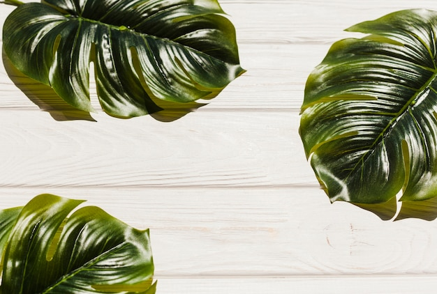 Monstera leaves on wooden background
