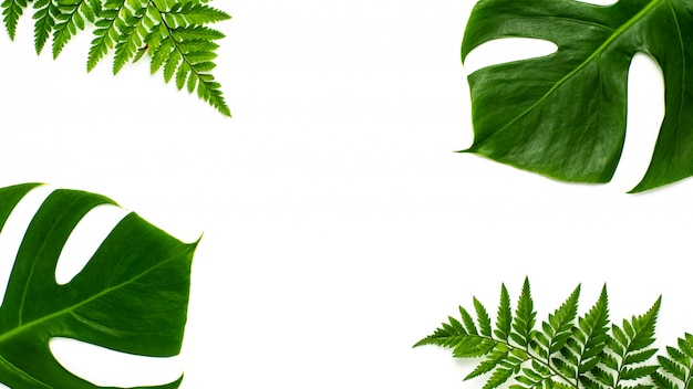 Monstera miltiple leaves and fern leaves isolated on white background. flat lay design