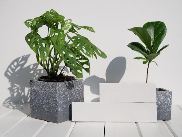 Monstera obliqua, 벽면, 창 잎 식물 및 ficus lyrata 유명한 식물 집 인테리어에 흰색 나무 테이블 이국적인 그림자 모양에 두 개의 긴 카드 또는 레이블이있는 콘크리트 냄비에있는 바이올린 무화과