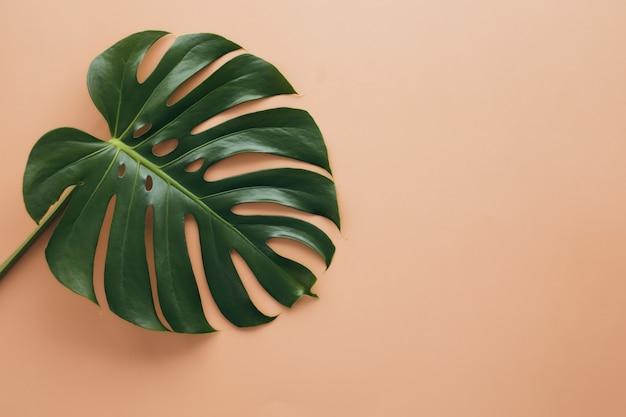 ベージュの背景にmonsteraヤシの緑の葉。高品質の写真