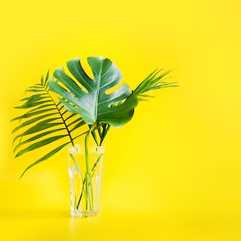 Monstera and palm leaves in glass isolated on bright yellow. minimalism.