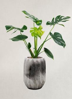 灰色の鍋にモンステラ植物
