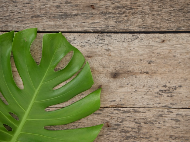 Monstera plant leaves, tropical evergreen vines isolated on the old wooden background, top view
