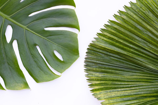 Monstera plant leaves with palm leaves