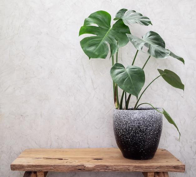 현대 컨테이너 그런 지 나무 테이블과 시멘트 로프트 벽 표면 이국적인 식물 인테리어에 monstera 열대 집 식물