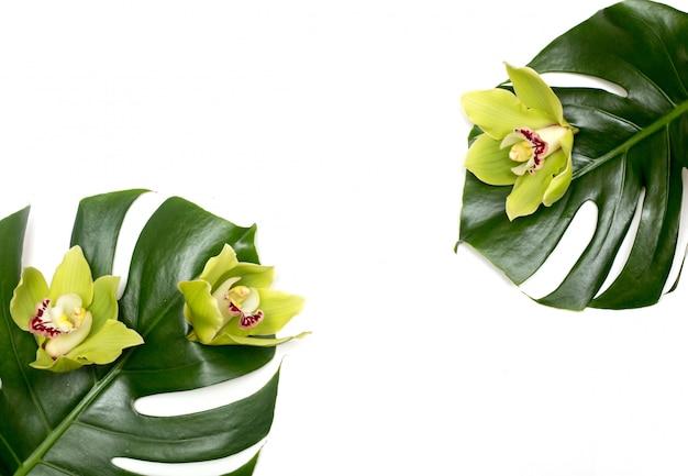 Монстера тропический пальмовый лист на белом фоне с зеленой орхидеей