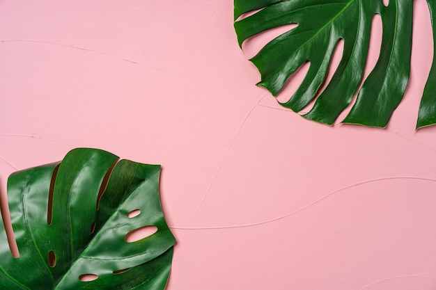 Monstera tropical plant leaf on pink background, flat lay