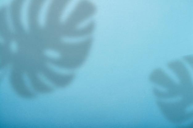 Абстрактная голубая предпосылка и тень тропического завода monstera.