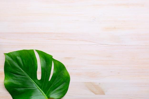 Тропический лист monstera на белой поверхности. копировать пространство