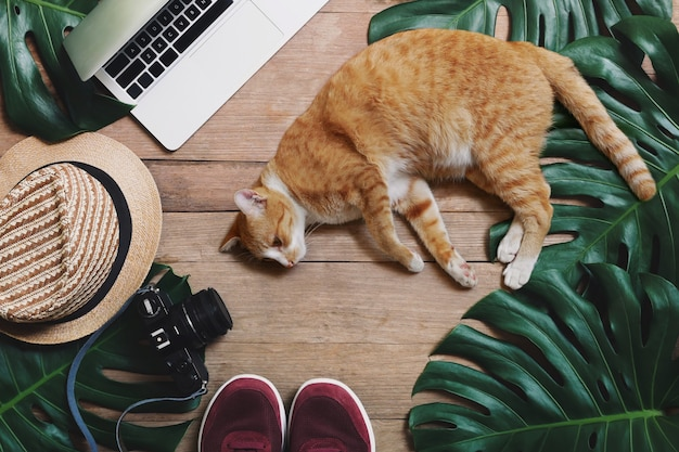Концепции баланса работы на дому, удаленной работы и баланса продолжительности службы с кошкой, лежащей перед ноутбуком на деревенском деревянном фоне с тропическими листьями monstera, шляпа, камера и спортивная обувь