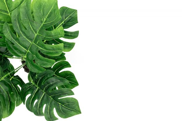 Monstera тропические пальмовые листья
