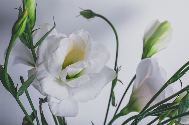 Moody floral background with white flowers eustoma or lisianthus on blue background with copy space, floral design, selected focus.