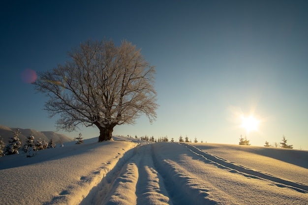 추운 안개 낀 아침에 겨울 산 숲에서 갓 내린 눈으로 덮인 보도 트랙과 어두운 벌거벗은 나무가 있는 변덕스러운 풍경.