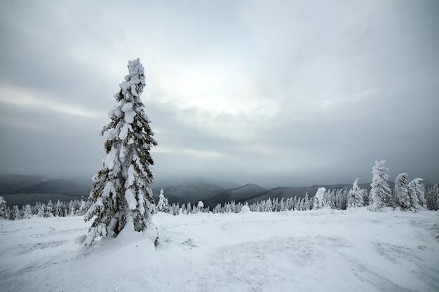 가문비 나무 숲의 변덕스러운 겨울 풍경은 차가운 얼어 붙은 고지대에 깊은 하얀 눈으로 움츠러 들었습니다.