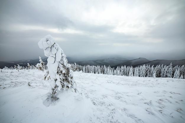 寒い凍った高地で真っ白な雪に覆われたトウヒの森の不機嫌そうな冬の風景。