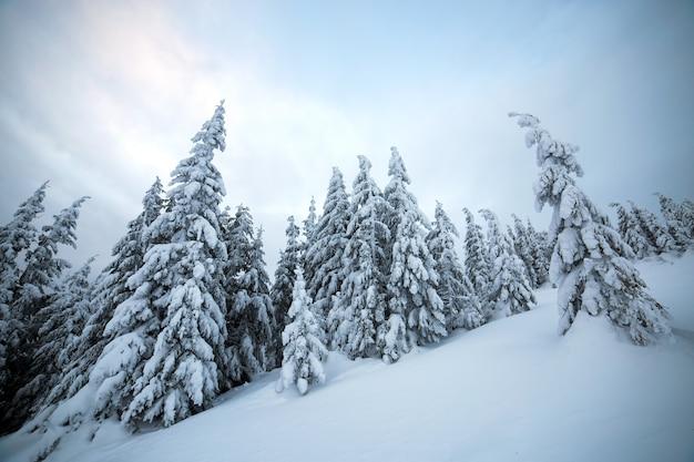 가문비 나무 숲의 변덕스러운 겨울 풍경은 차가운 얼어 붙은 산에 깊은 하얀 눈으로 움츠러 들었습니다.