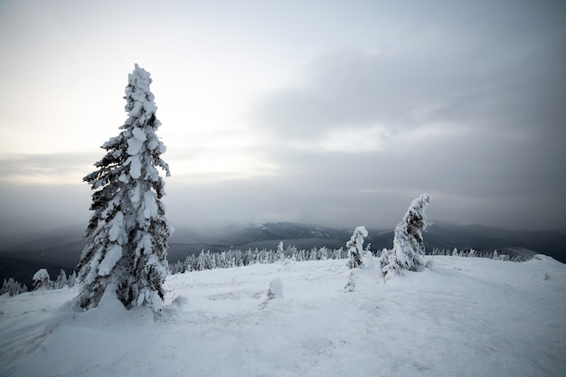 Moody winter landscape with spruce forest cowered with white snow in cold frozen mountains.