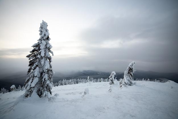 寒い凍った山々に白い雪が積もったトウヒの森のある不機嫌そうな冬の風景。