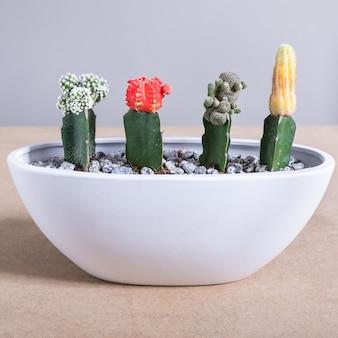 Террариум moon cactus в белом горшке
