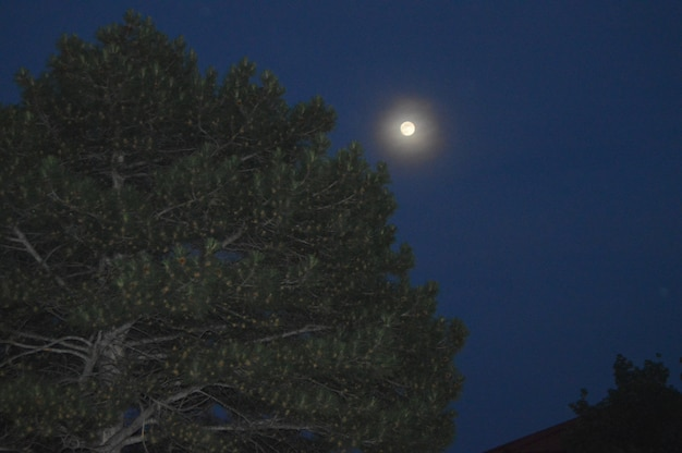 The moon in the night sky shines over the tree pine with cones.