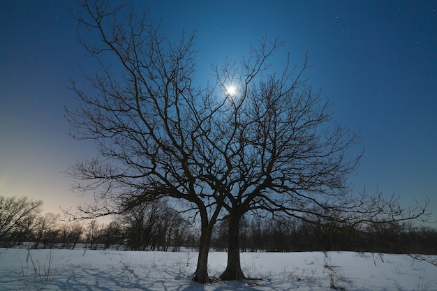 The moon shines through the branches of a tree against the night starry sky in winter.