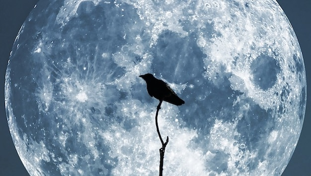 Moon sky night glowing crow collage