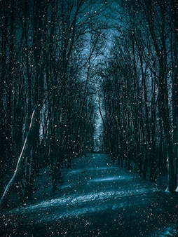 Moonlight path through the winter forest.