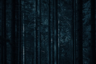 Moonlight Spooky Forest