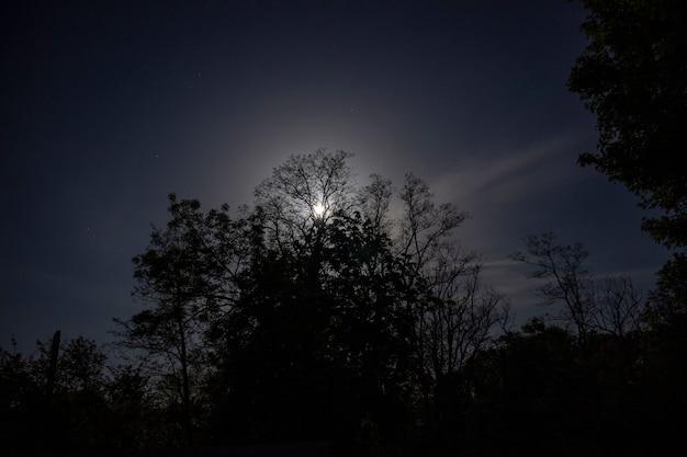 Лунный свет сквозь ветви деревьев