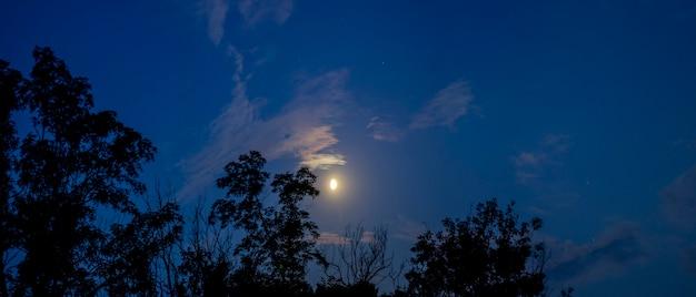 Лунный свет со звездами на фоне деревьев.