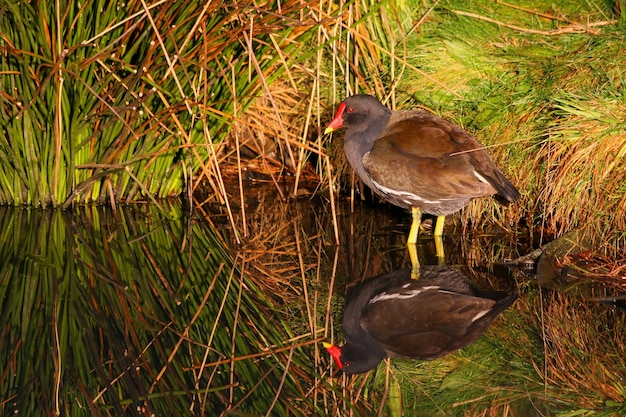 Мурхен залился золотым светом в barnes wetland trust