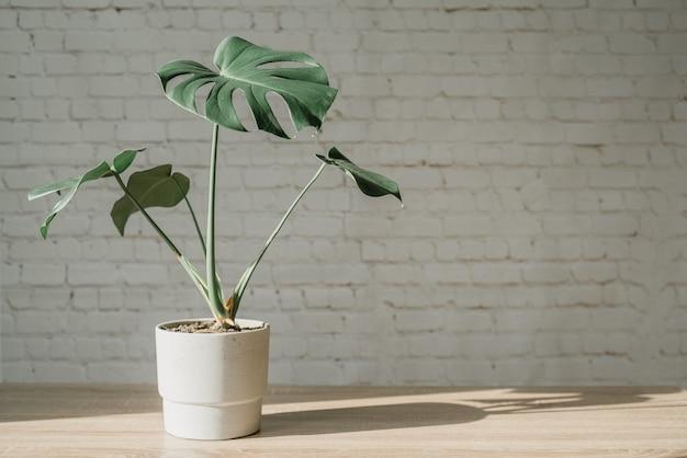 Современное рабочее пространство с растением монстера в цементном горшке, ноутбуком и мышью на фоне стены из белого кирпича, современное комнатное растение на столе
