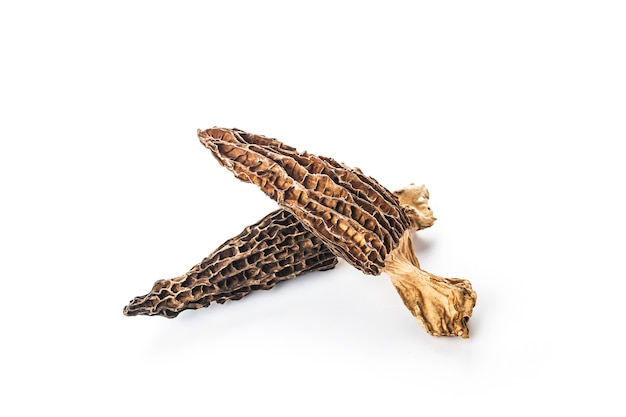 Morel mushroom isolated on white