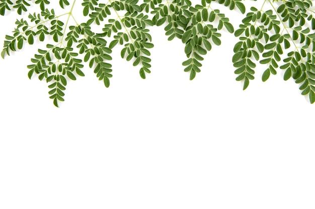 モリンガの枝と緑の葉が白い背景で隔離。