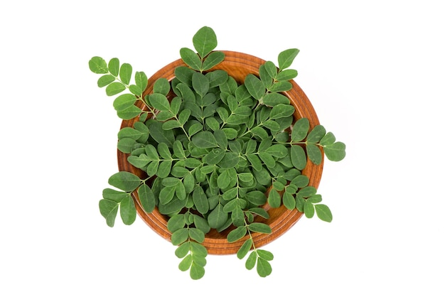 Moringa branch green leaves isolated on white surface.top view,flat lay.