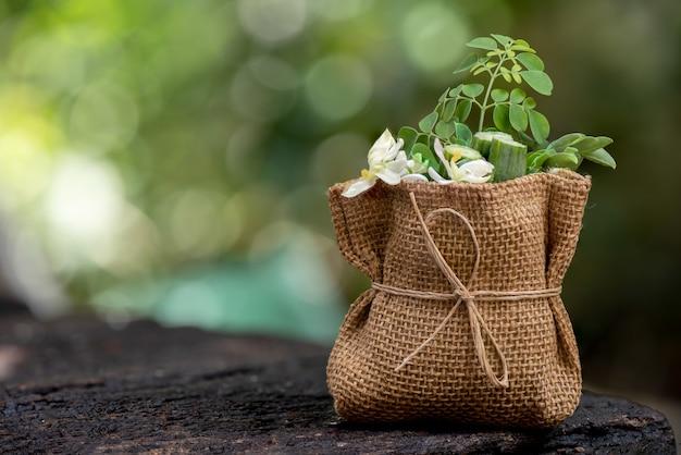 モリンガ緑の葉、果物や自然の花。