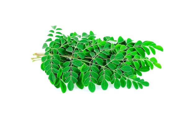 Moringa leaves isolated on white .
