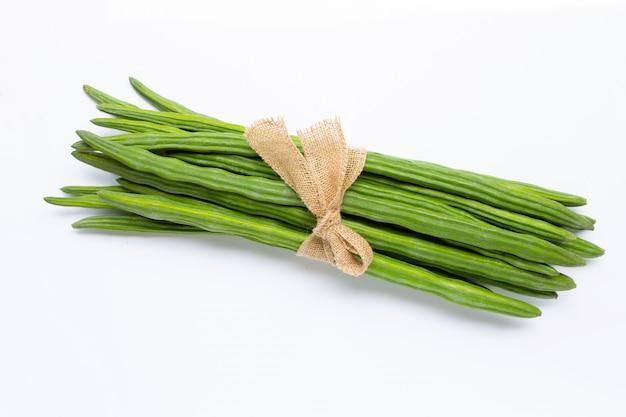 Moringa oleifera isolated on white