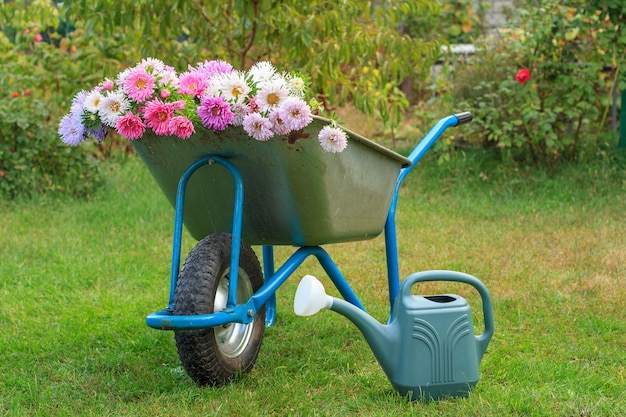 Morning after work in summer garden. wheelbarrow with flowers, watering can on green grass.