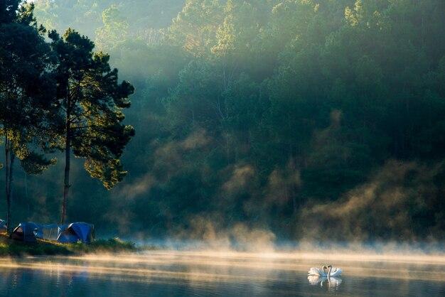 Утро на озере панг унг, провинция панг унг мэ хонг сон, север таиланда, плавают два лебедя.